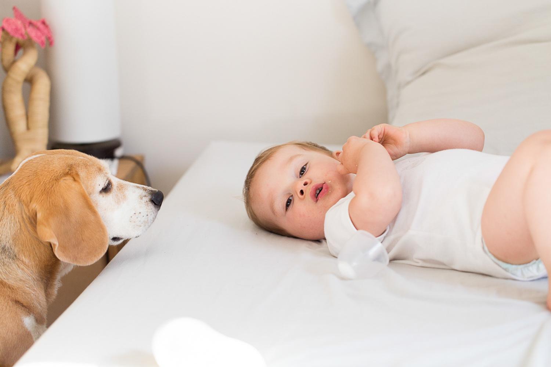 boogle-le-beagle-vie-de-chien-sliceofcactus