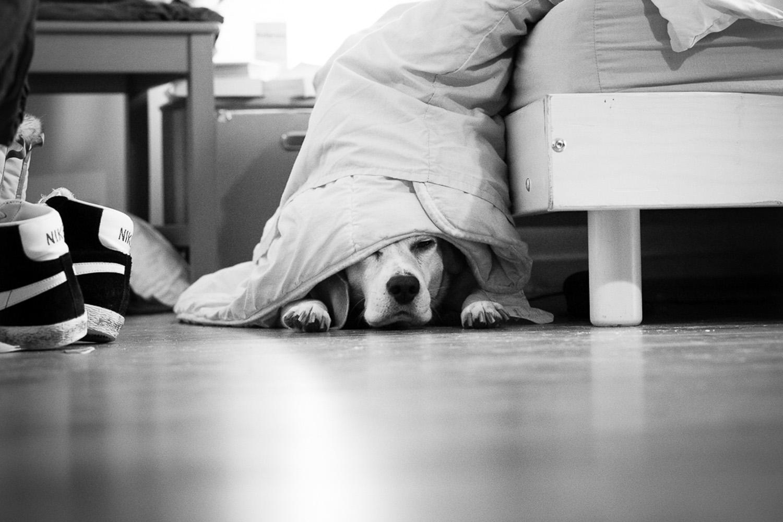 boogle-le-beagle-vie-de-chien-sliceofcactus-5