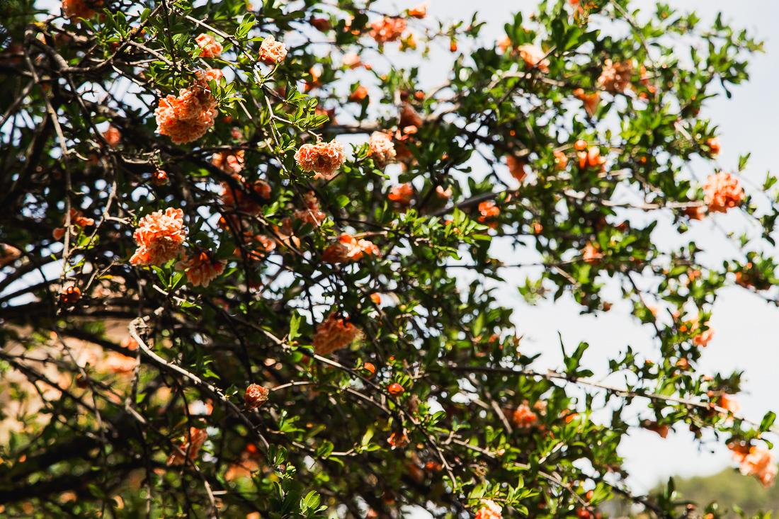 sliceofcactus-carnet-de-voyage-andalousie-alhambra-van-trip-0510
