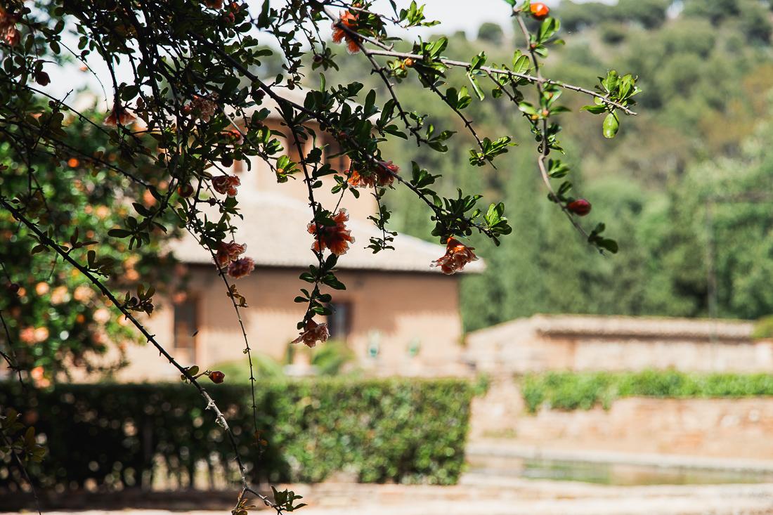 sliceofcactus-carnet-de-voyage-andalousie-alhambra-van-trip-0534