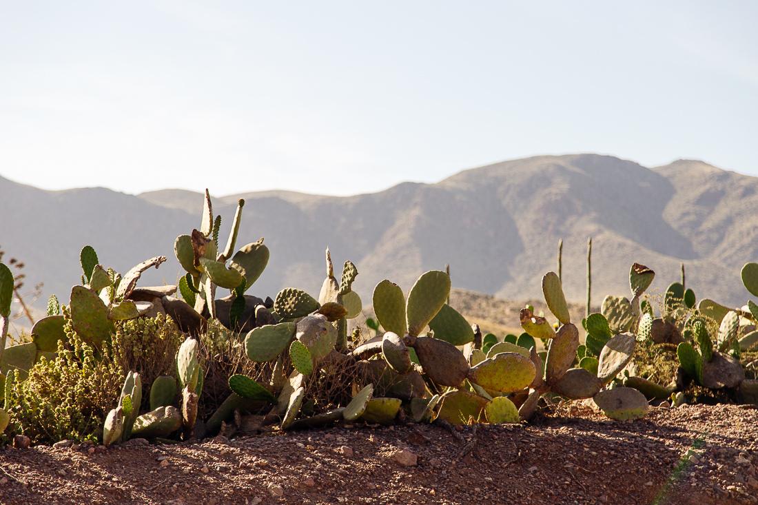 sliceofcactus-carnet-de-voyage-andalousie-cabo-de-gata-van-trip-0707