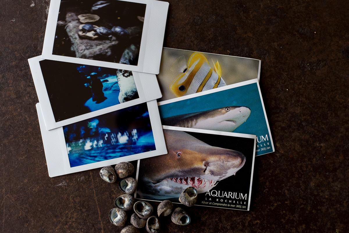 la-rochelle-zoo-palmyre-aquarium-oleron-instax-mini-6370