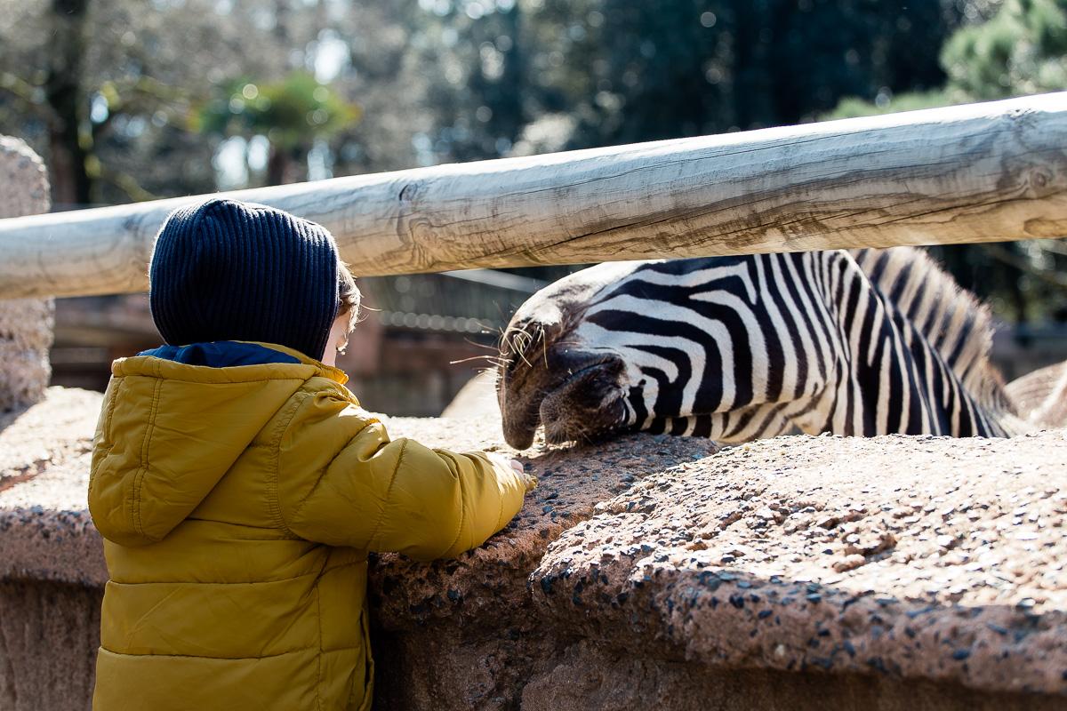 le-zoo-de-la-palmyre-a-royan-5750