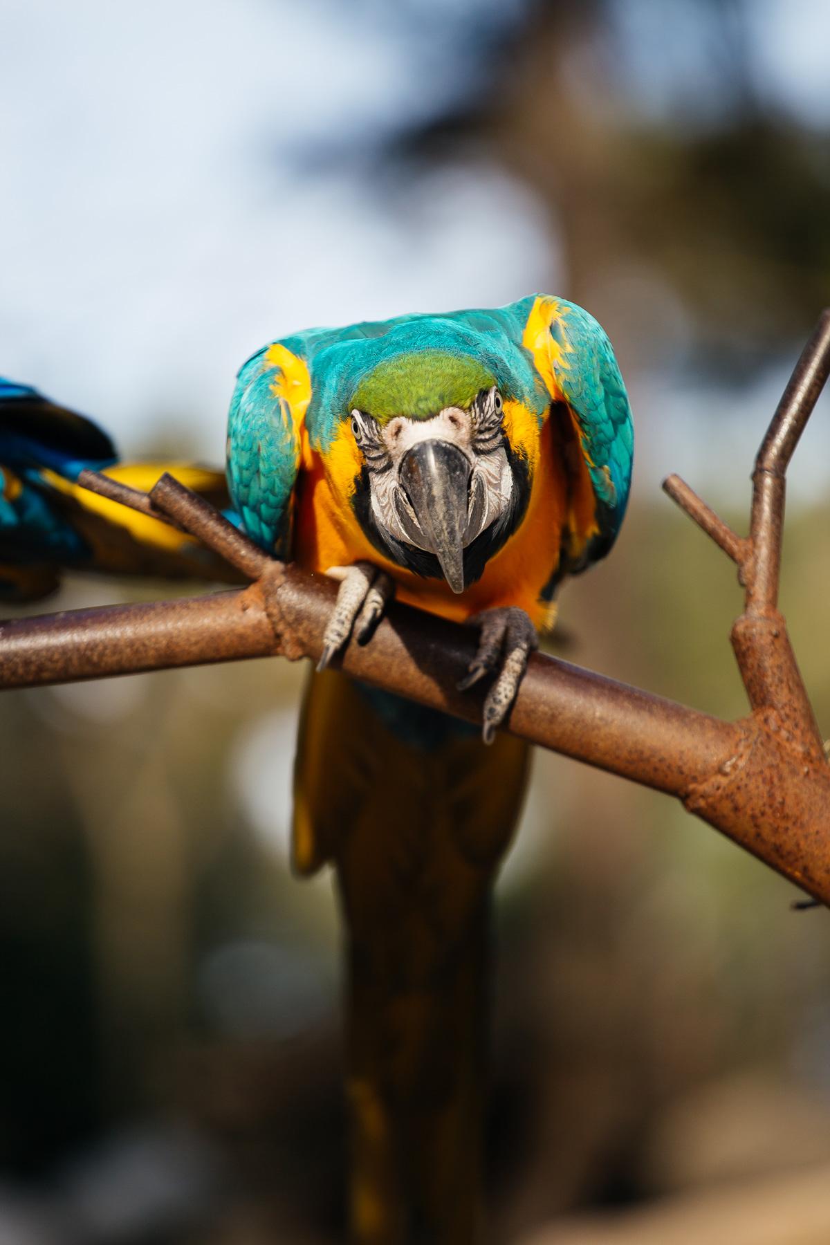 le-zoo-de-la-palmyre-a-royan-5928