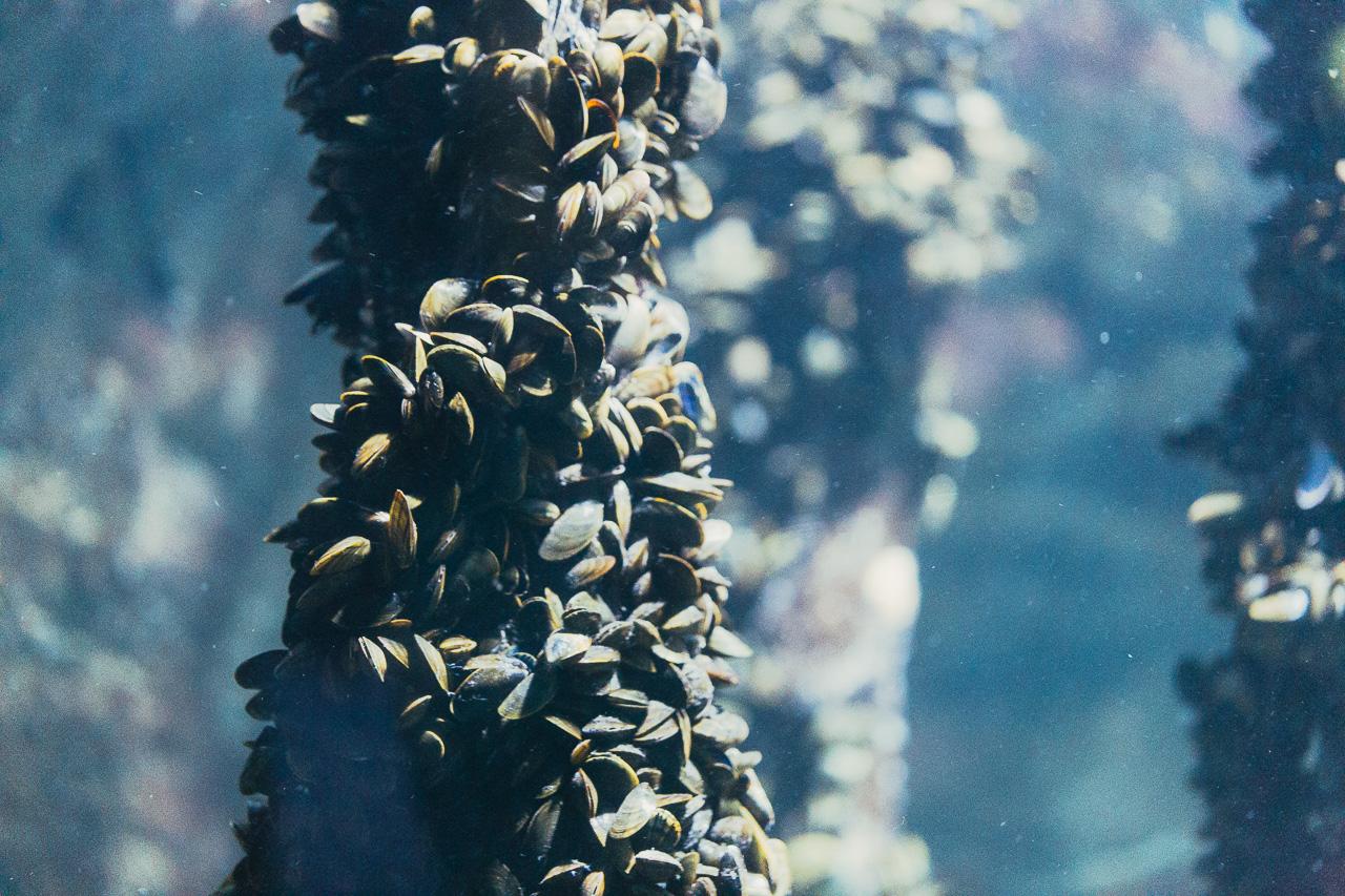 la-rochelle-et-son-aquarium-6111