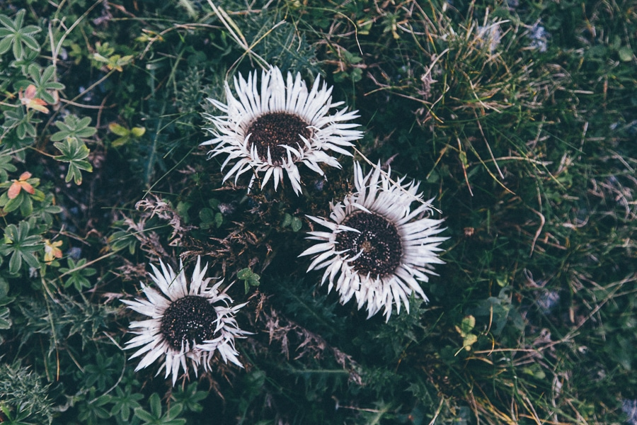 sliceofcactus-lapierresaintmartin-4438