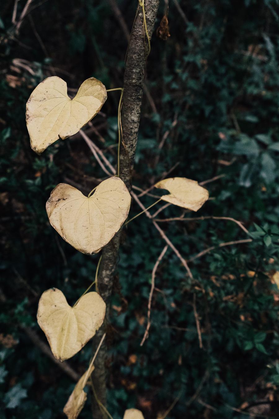 sliceofcactus-balade-en-foret-automne-12