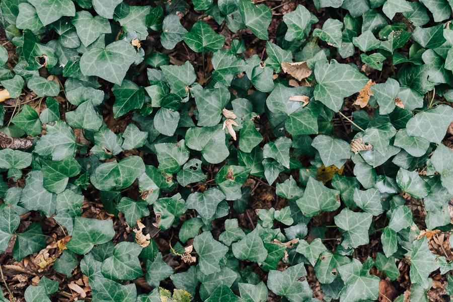 sliceofcactus-balade-en-foret-automne-13