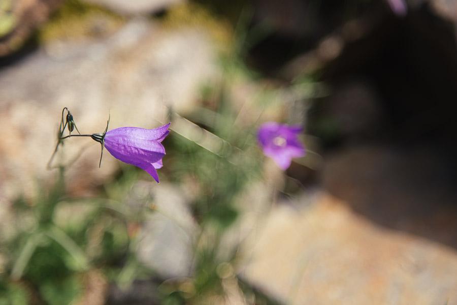 sliceofcactus-lac-d-anglas-2542