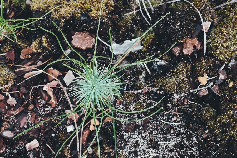 sliceofcactus-lacanau-lac-de-cousseau-4142