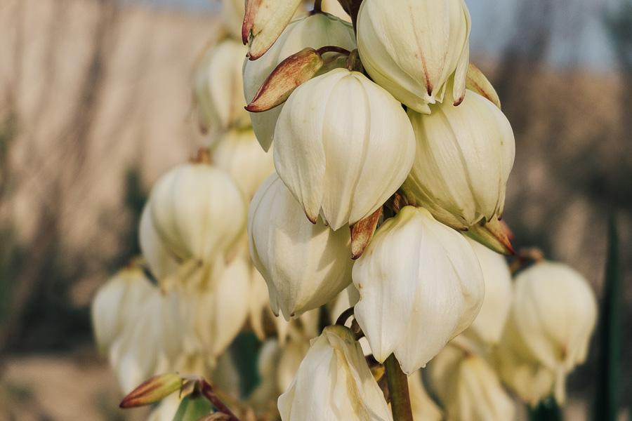 sliceofcactus-plage-les-casernes-landes-4449