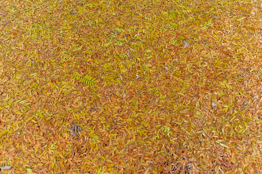 sliceofcactus-automne-parc-bordelais-17