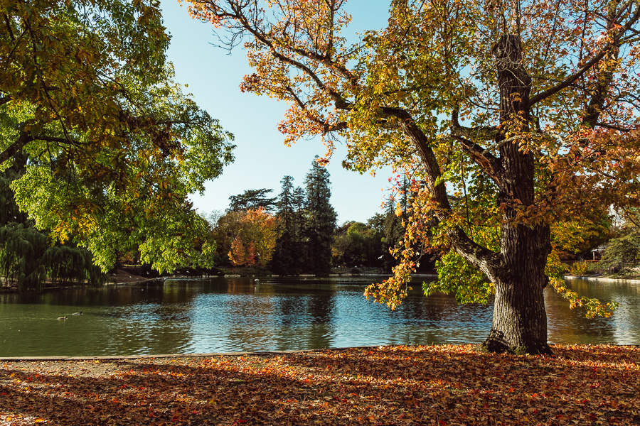sliceofcactus-automne-parc-bordelais-2