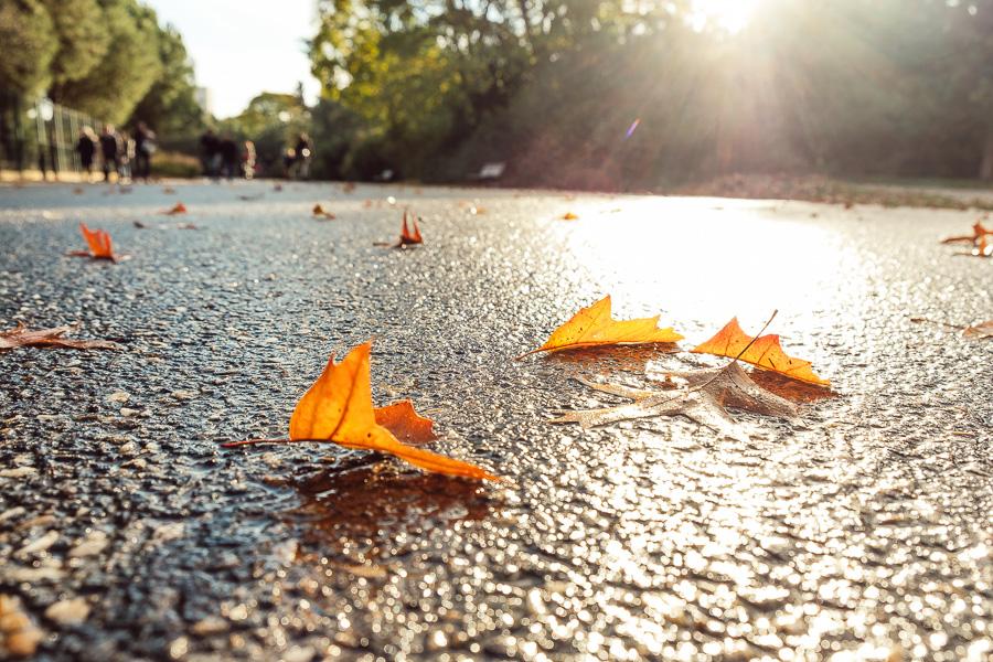 sliceofcactus-automne-parc-bordelais-23