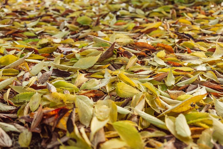 sliceofcactus-automne-parc-bordelais-27