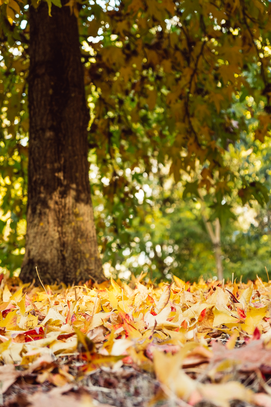 sliceofcactus-automne-parc-bordelais-30