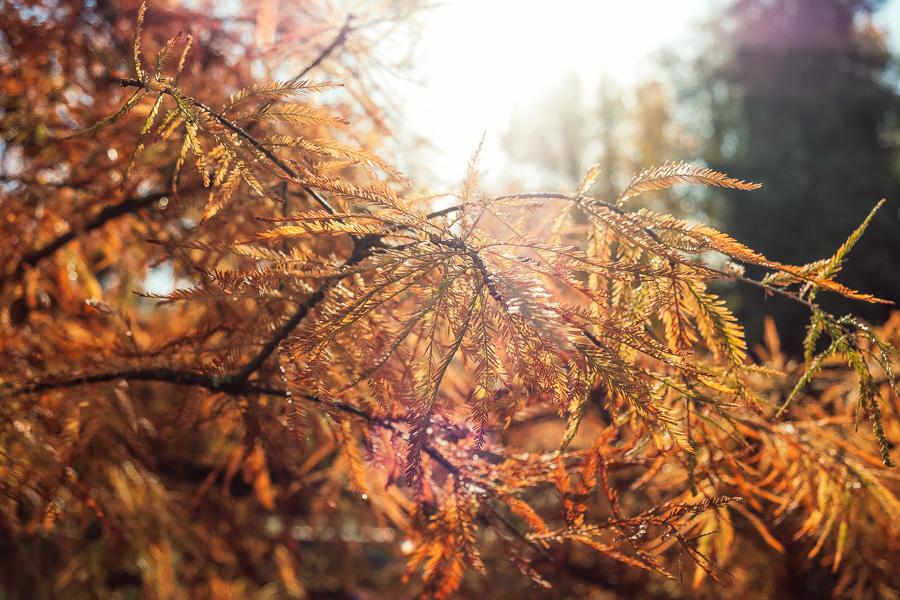 sliceofcactus-automne-parc-bordelais-4