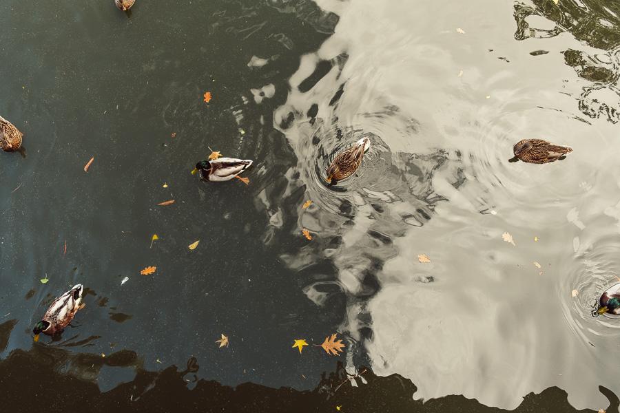 sliceofcactus-automne-parc-bordelais-9