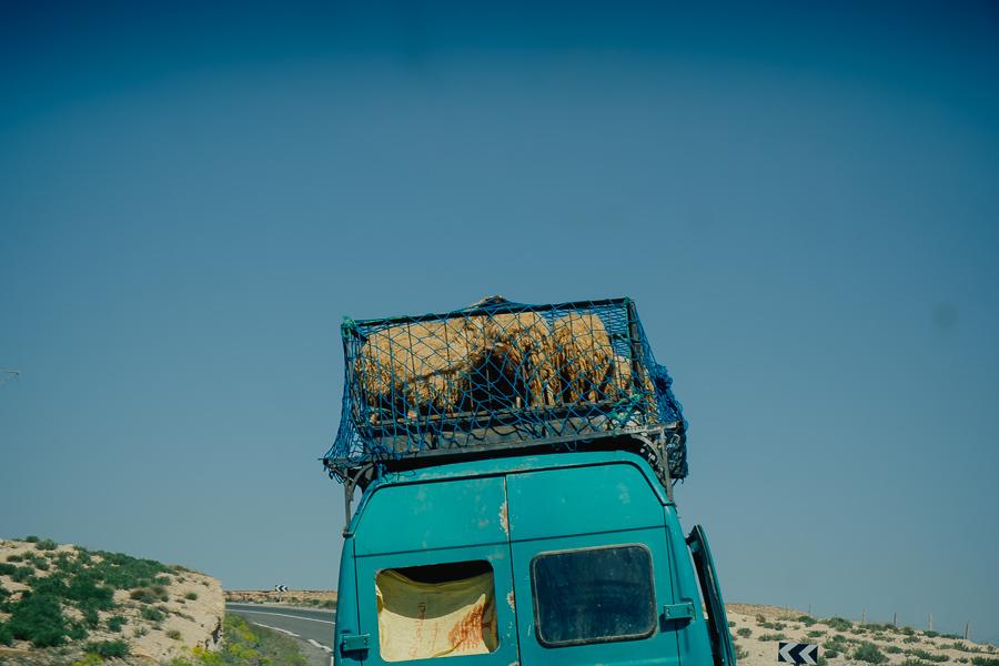 moutons sur toit camion