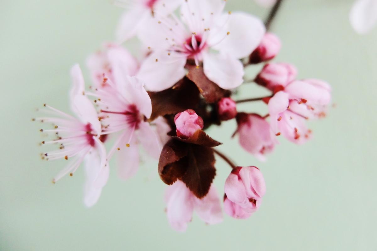 Esquisse de printemps