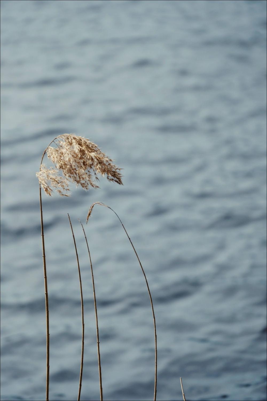 Découverte de la lagune de Contaut