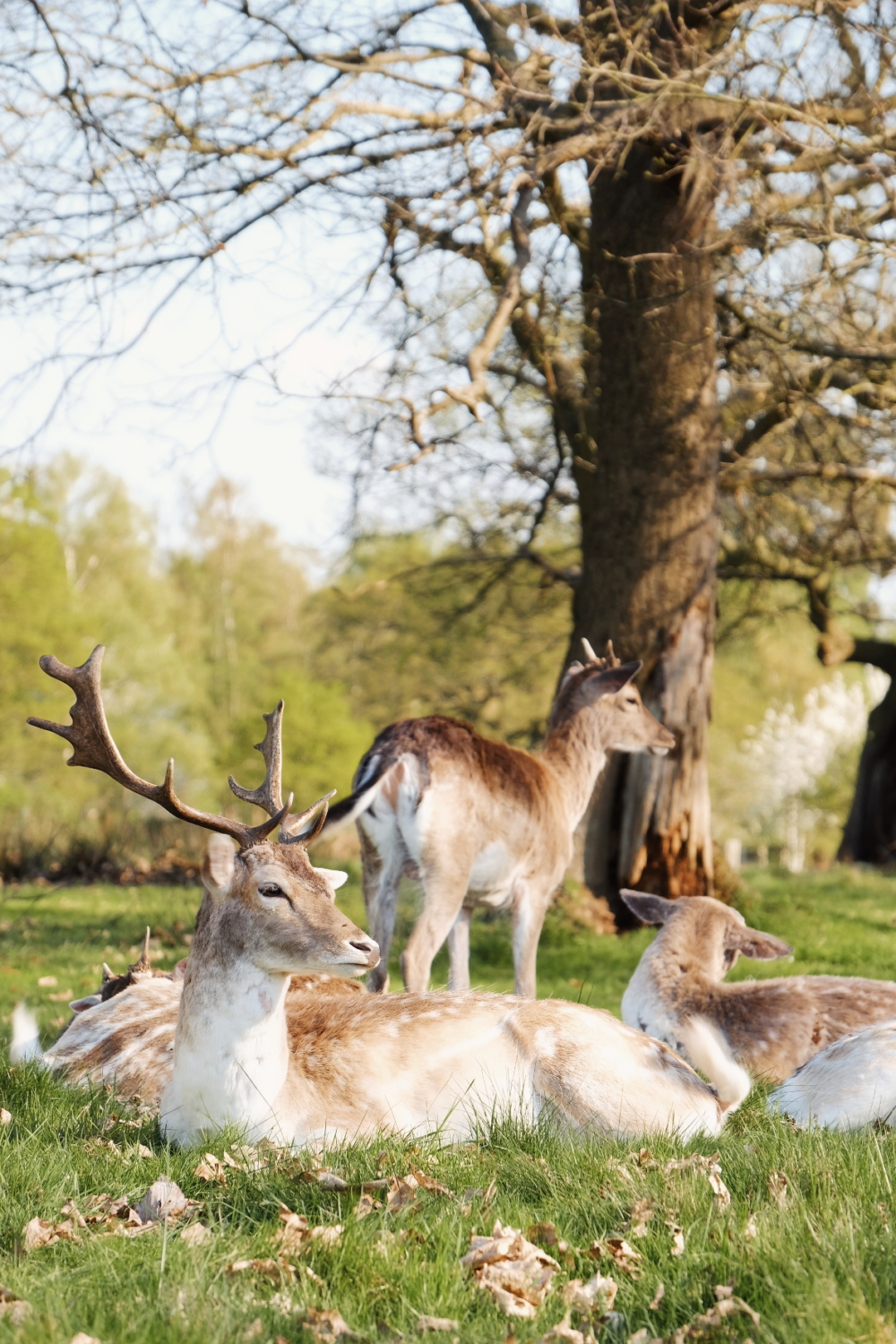Londres - Richmond Park